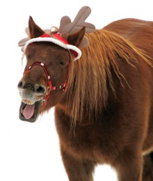 Merry Christmas! Did you know that 2014 is the Year of the Horse?